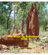 The Great Oz Walkabout Book 5